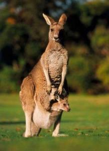 cerita rakyat dari australia 3